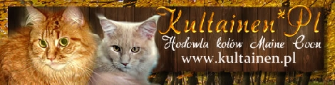 Hodowla kotów rasy Maine Coon Kultainen*Pl